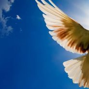 Spiritual Practice and Violence